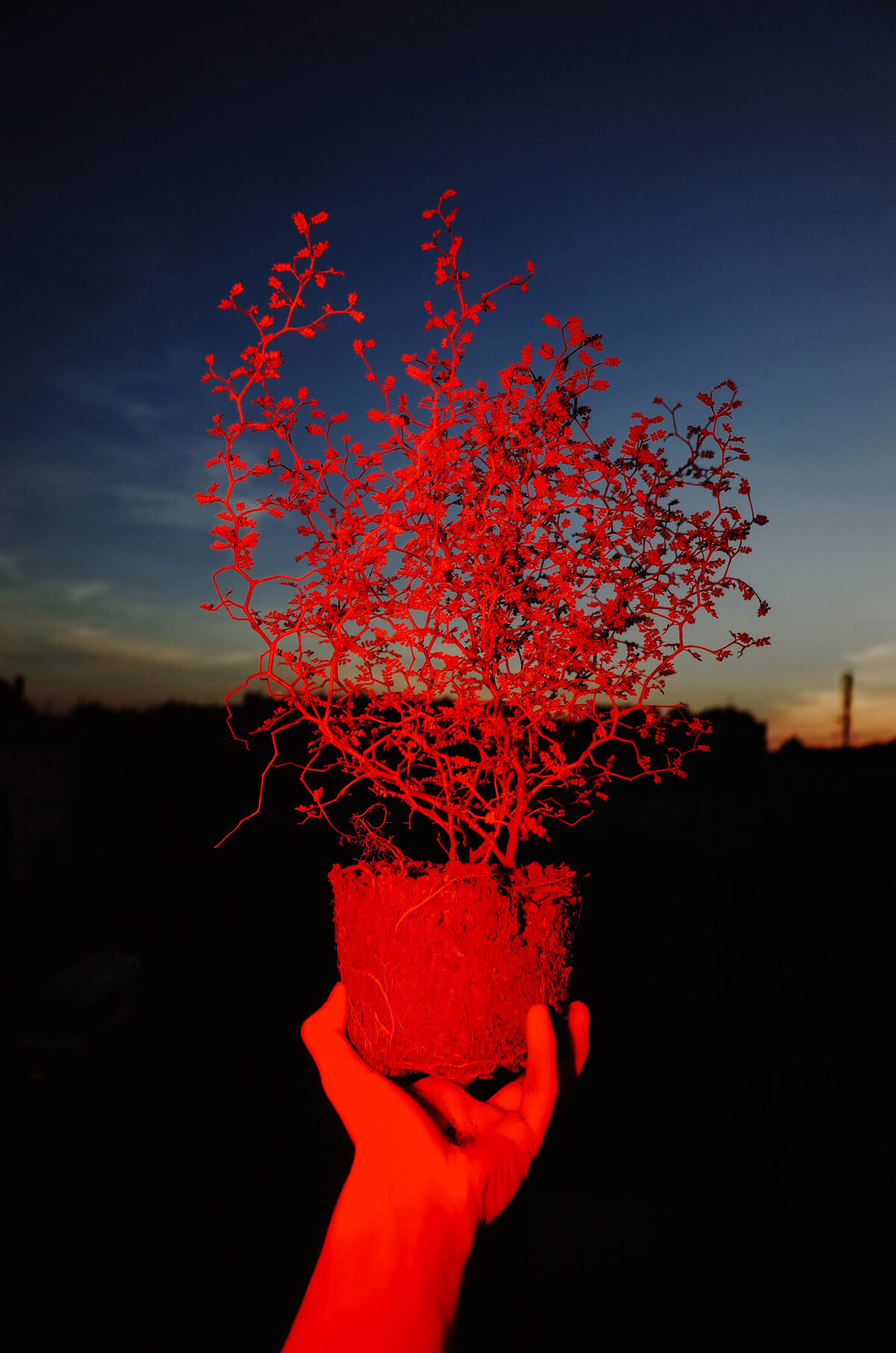 Stranger Things. Fotografía: Max Slobodda