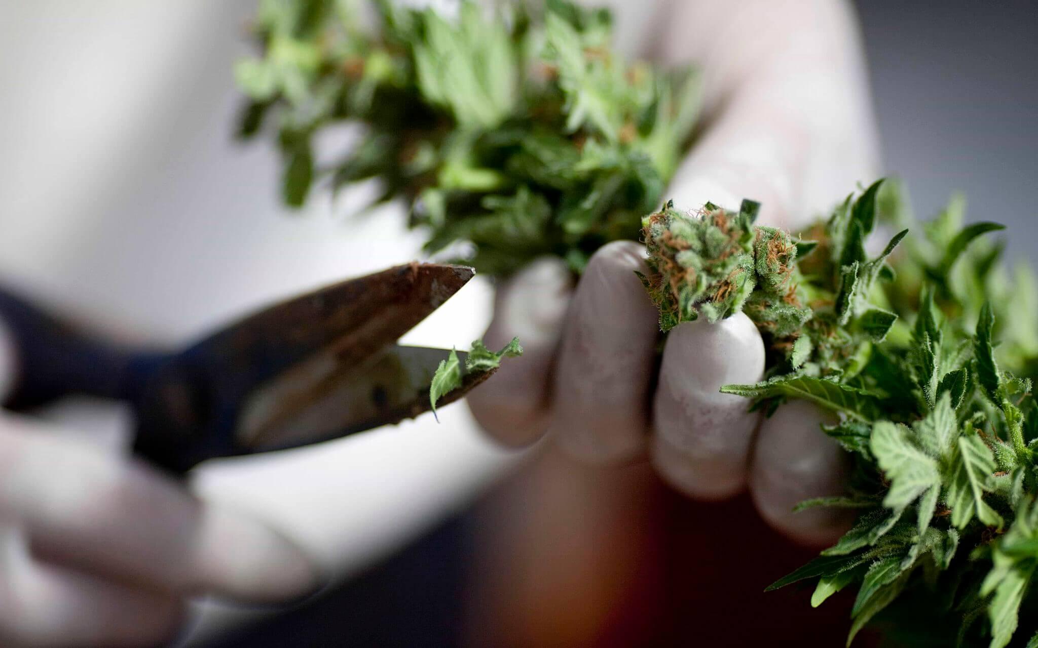 ¿Será la ezquizofrenia la próxima enfermedad que podrá ser tratada con marihuana?