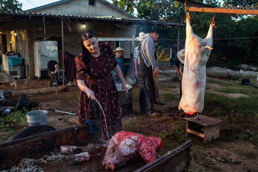 """Nadia Shira Cohen, """"La miel de Dios"""" (2018): Ana Ham limpia la cabeza de un cerdo, mientras que los hombres de la familia ayudan con el resto del cuerpo. Imagen: © Nadia Shira Cohen"""