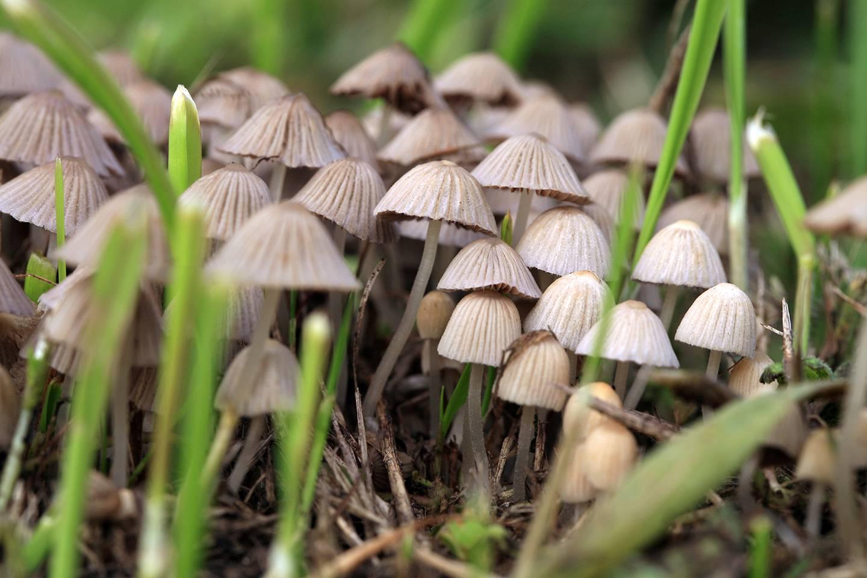 Una dosis única de hongos alucinógenos puede tener un efecto positivo sobre la depresión durante años, según estudio