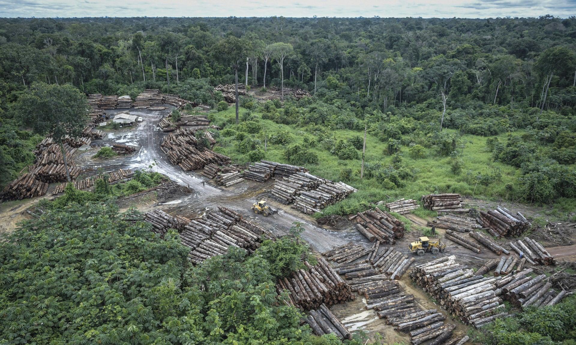 La deforestación del Amazonas podría crear las condiciones perfectas para la próxima pandemia, según expertos