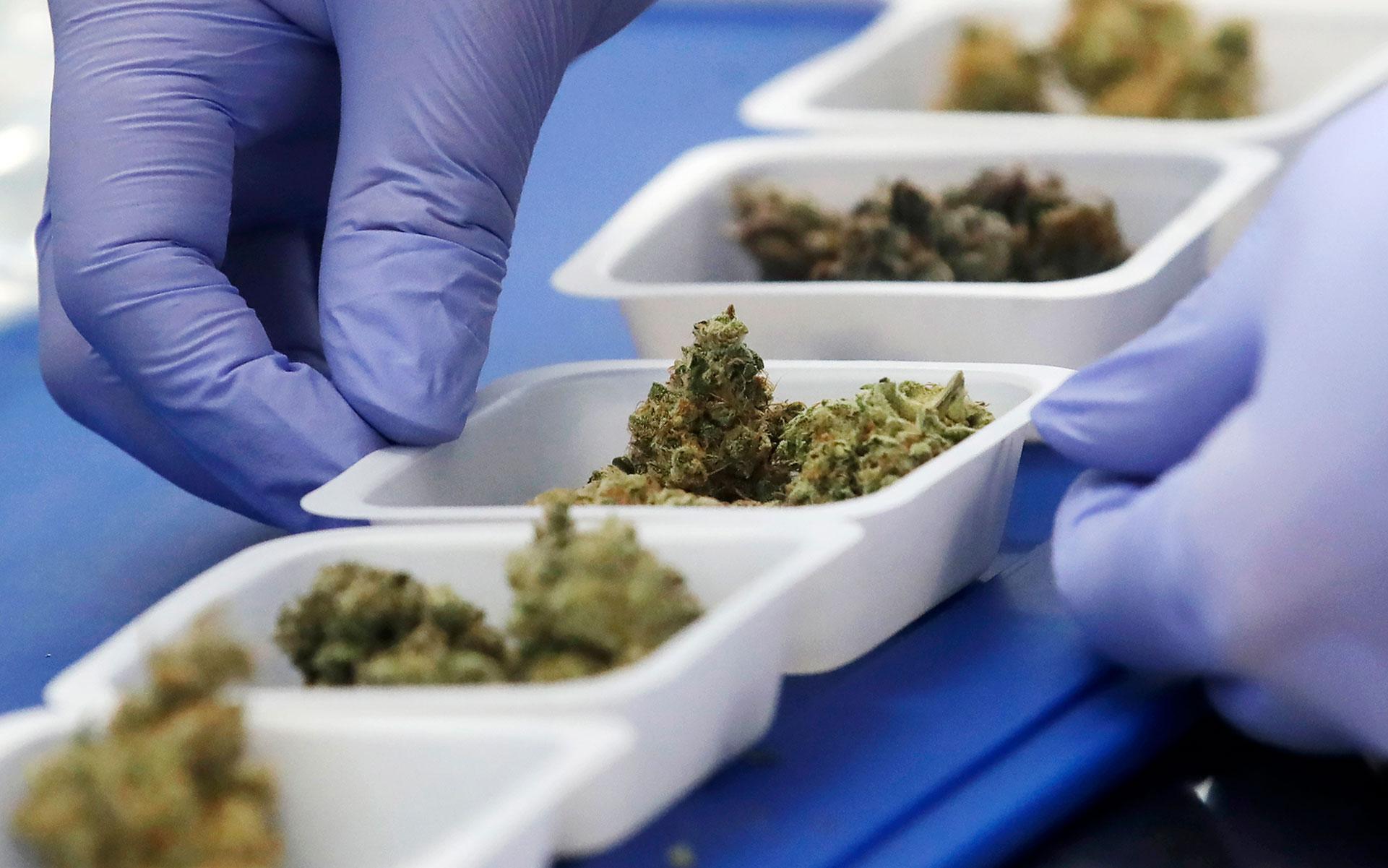 Aceleran el desarrollo de un tratamiento con cannabis para mitigar el COVID-19