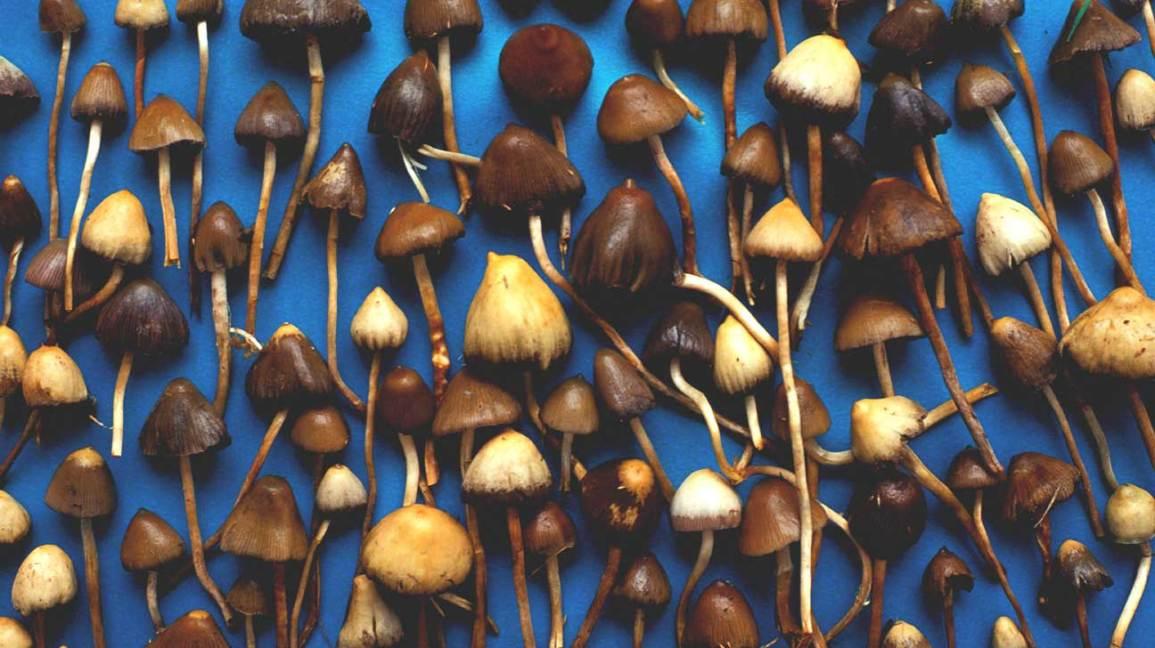 Los hongos mágicos podrían mejorar la salud mental durante situaciones angustiantes, según estudio