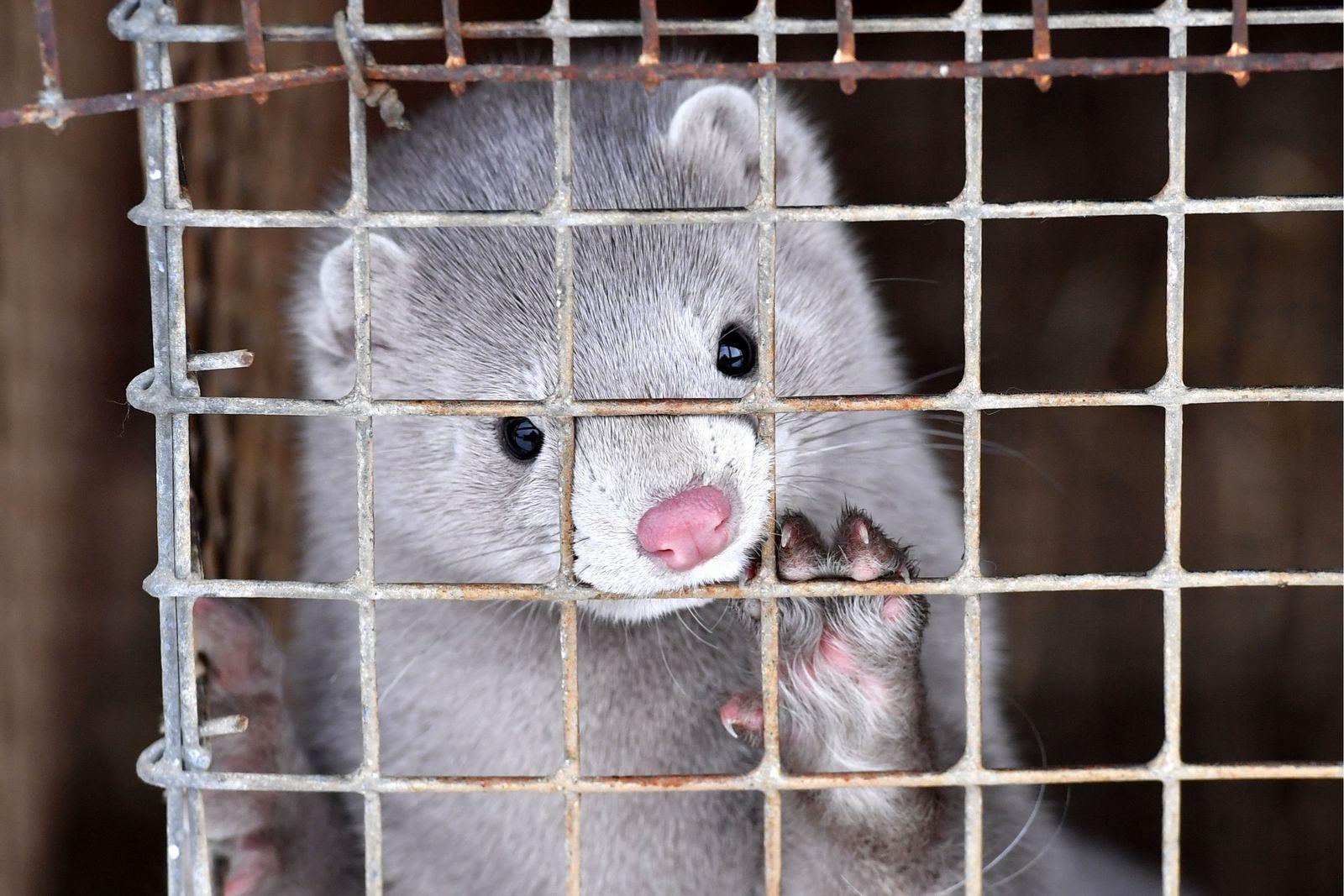 Francia prohibirá animales salvajes en circos, cría de visones y animales marinos en cautiverio