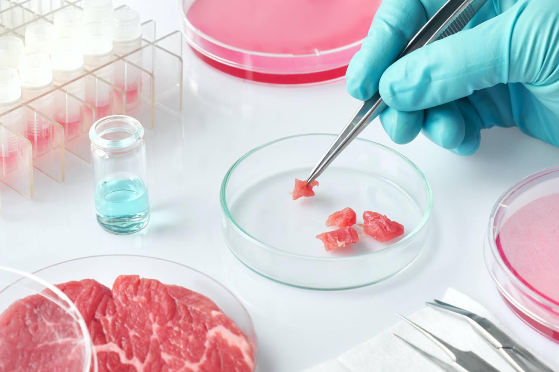 ¿Carne hecha con espinacas? Científicos utilizan el esqueleto de la planta para crear carne roja en el laboratorio