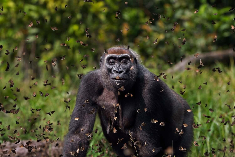 Las 10 fotos más impresionantes del concurso de fotografía Nature Conservancy que retratan lo mejor de la naturaleza